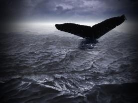 Jonah (blank title)